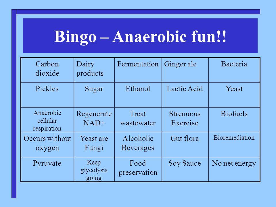 Using the buzz word bingo template copy the powerpoint 3 bingo anaerobic toneelgroepblik Images