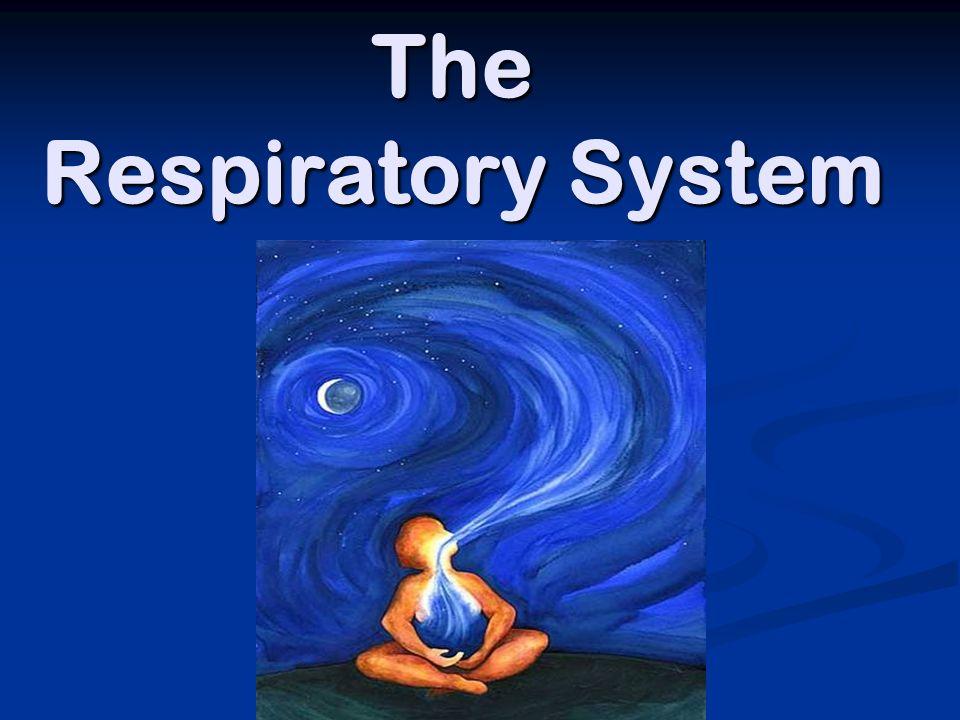 respiration yoga video