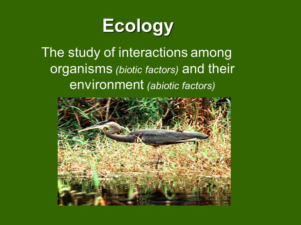 Ecology The study of interactions among organisms (biotic factors) and their environment (abiotic factors)