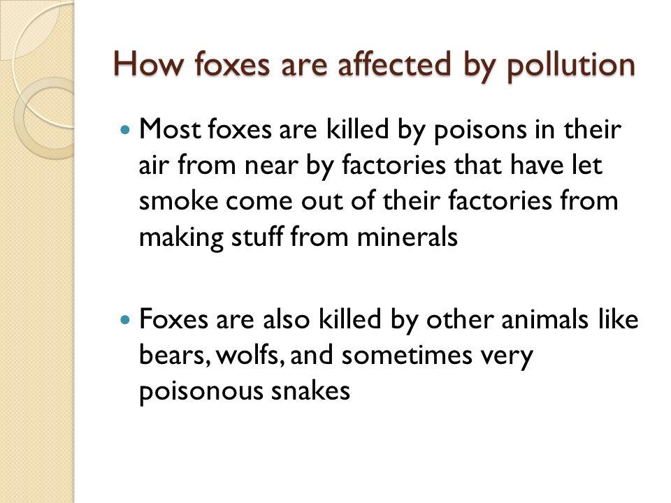 Where do foxes sleep.