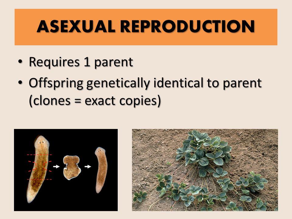 Asexual & Sexual REPRODUCTION. ASEXUAL REPRODUCTION Requires 1 ...