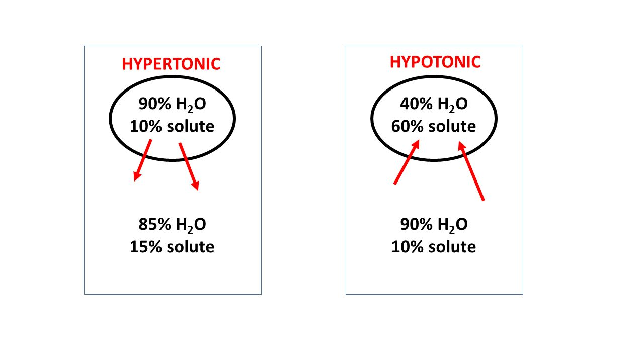 Freshwater fish hypertonic - 5 90 H 2 O 10 Solute 85 H 2 O 15 Solute 40 H 2 O 60 Solute 90 H 2 O 10 Solute Hypertonic Hypotonic
