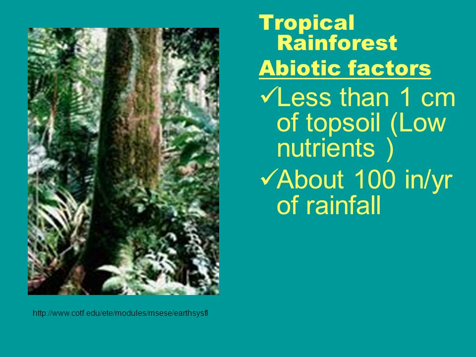 World Biomes. Tropical Rainforest Location: Found near equator ...