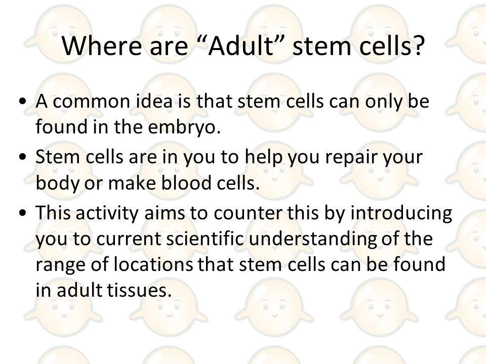 USA controversy about stem cells in brief Where are stem cells – Cell Differentiation Worksheet