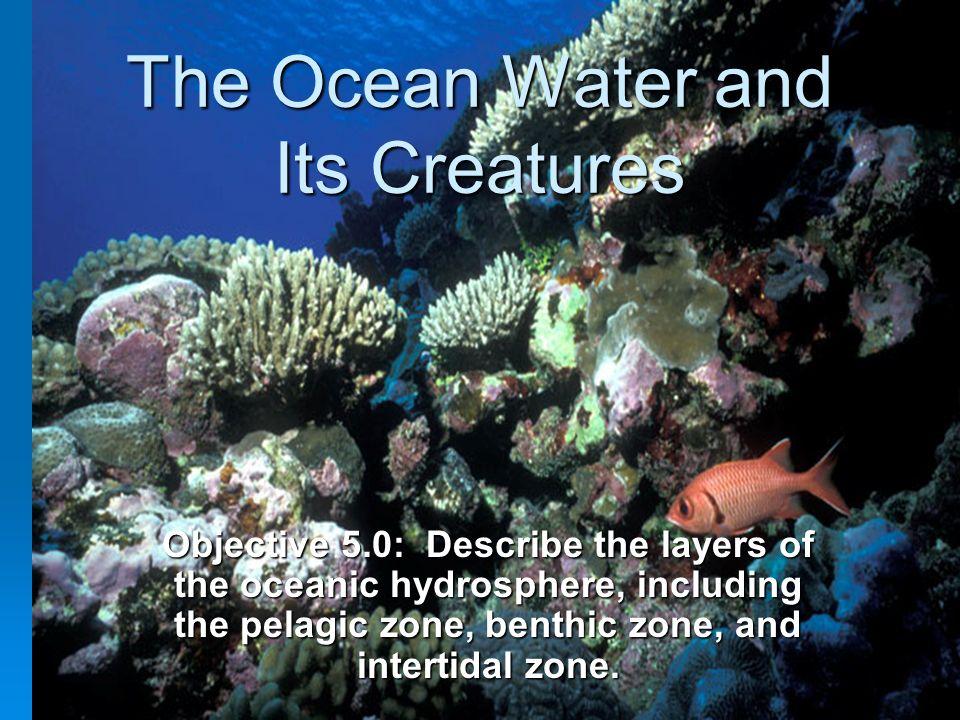 12 Intertidal Zone: http://www.mbayaq.org/lc/activities/l yrics_rocksong.asp?bhcp=1