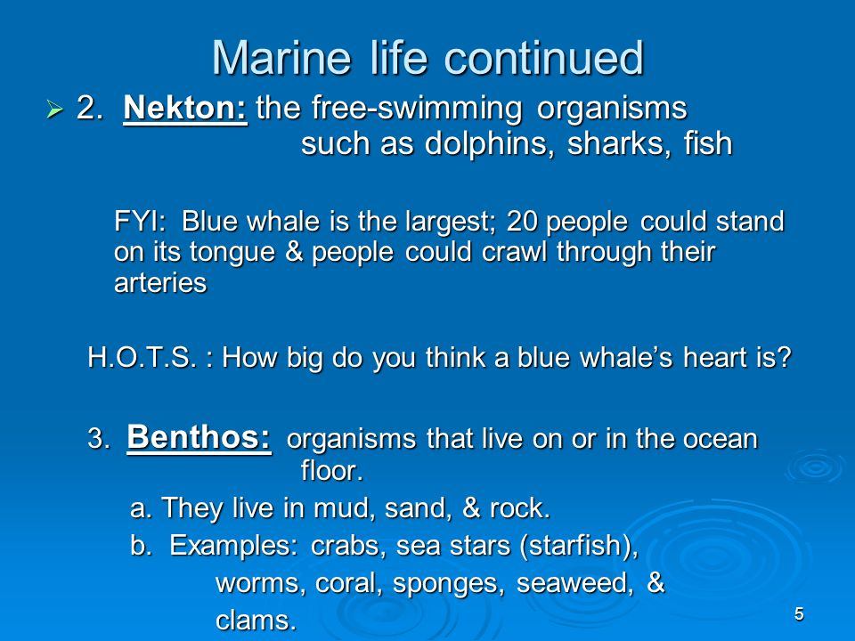 6 Nekton Whale shark