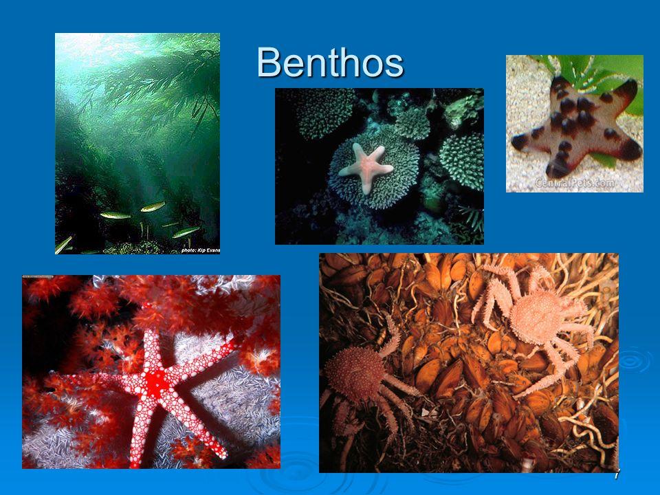 8 C.Wide range of habitats in the ocean 1. dark, cold, high-pressure  2.