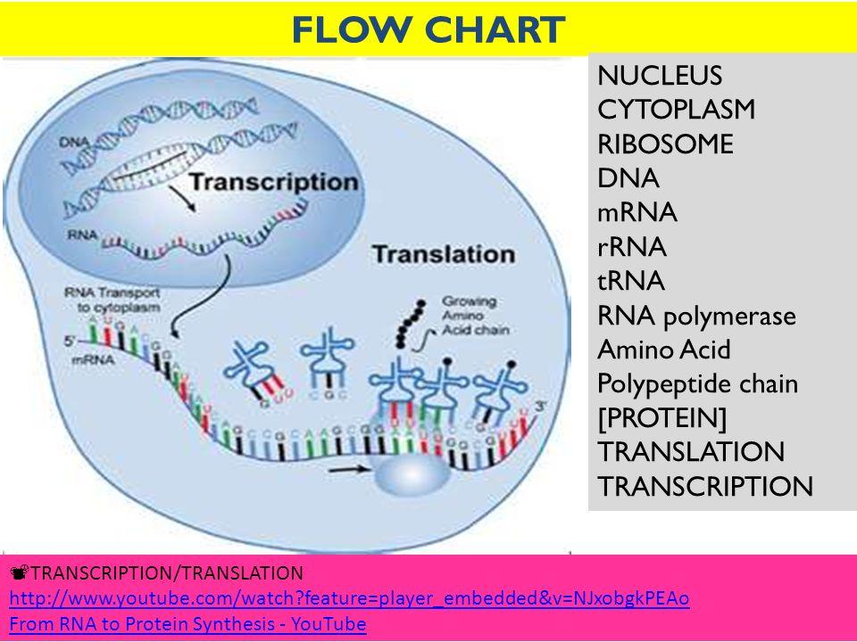 transcription chart