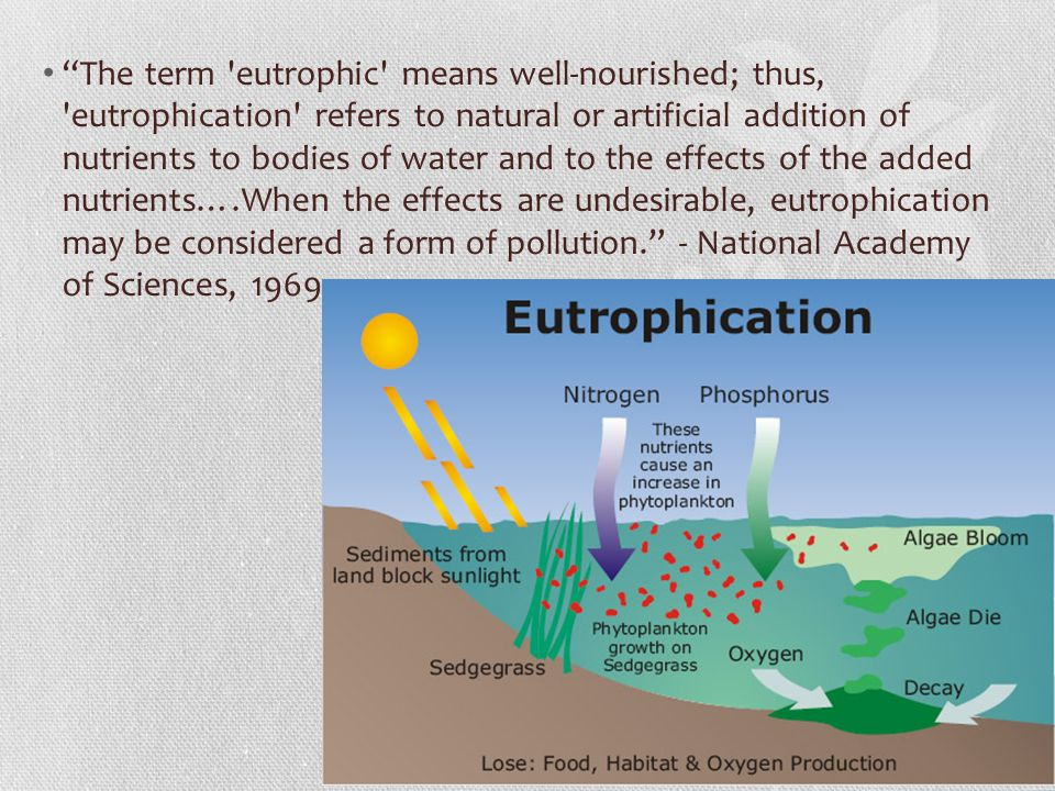 eutrophication essay Read this essay on eutrophication come browse our large digital warehouse of free sample essays get the knowledge you need in order to pass your classes and more.