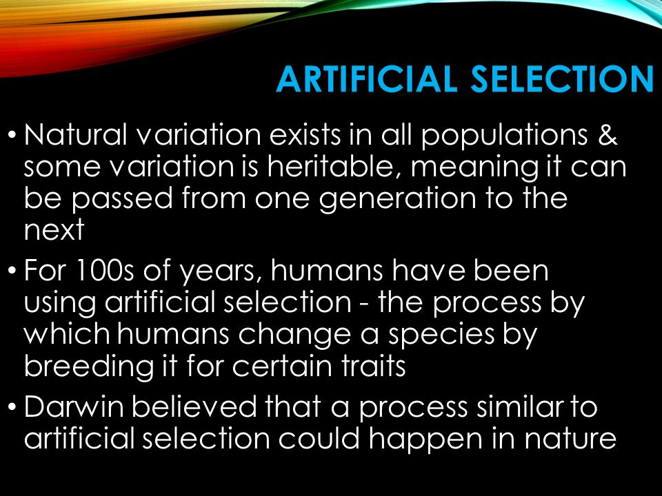 ARTIFICIAL SELECTION Natural variation exists in all populations & some variation is heritable, meaning it can be passed from one generation to the next For 100s of years, humans have been using artificial selection - the process by which humans change a species by breeding it for certain traits Darwin believed that a process similar to artificial selection could happen in nature