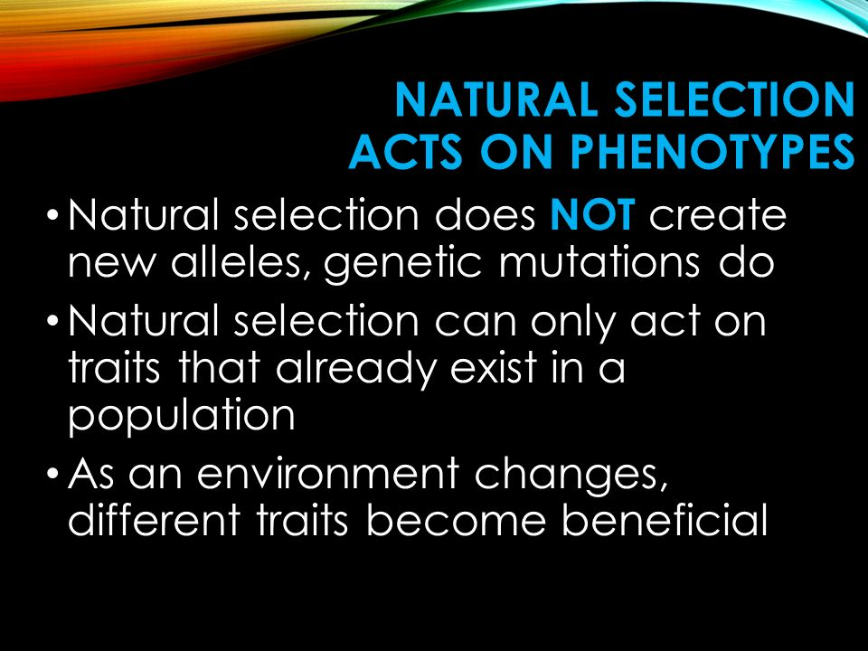NATURAL SELECTION ACTS ON PHENOTYPES Natural selection does NOT create new alleles, genetic mutations do Natural selection can only act on traits that already exist in a population As an environment changes, different traits become beneficial