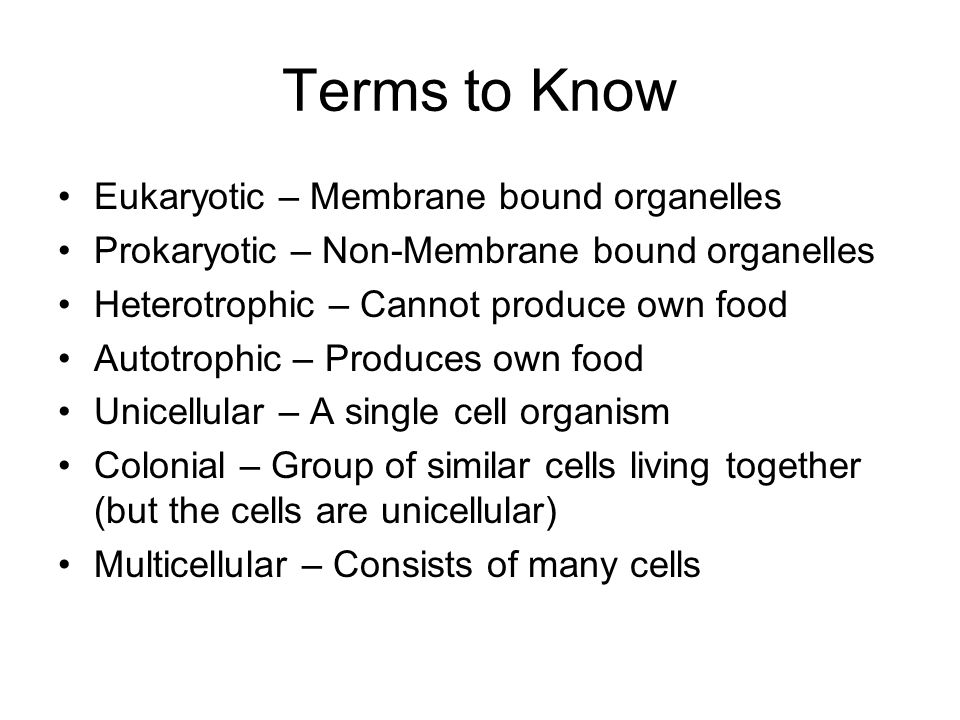 Terms to Know Eukaryotic – Membrane bound organelles Prokaryotic – Non-Membrane bound organelles Heterotrophic – Cannot produce own food Autotrophic – Produces own food Unicellular – A single cell organism Colonial – Group of similar cells living together (but the cells are unicellular) Multicellular – Consists of many cells