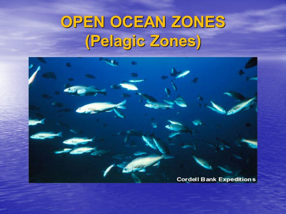 OPEN OCEAN ZONES (Pelagic Zones)