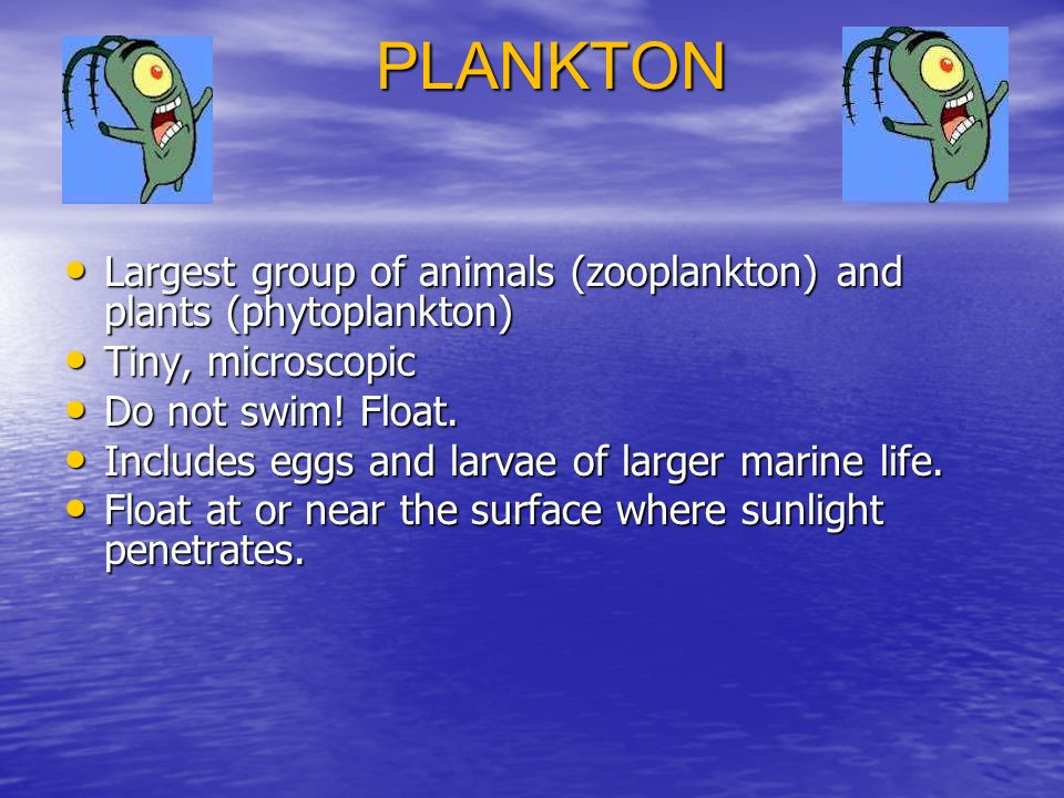 PLANKTON Largest group of animals (zooplankton) and plants (phytoplankton) Largest group of animals (zooplankton) and plants (phytoplankton) Tiny, microscopic Tiny, microscopic Do not swim.