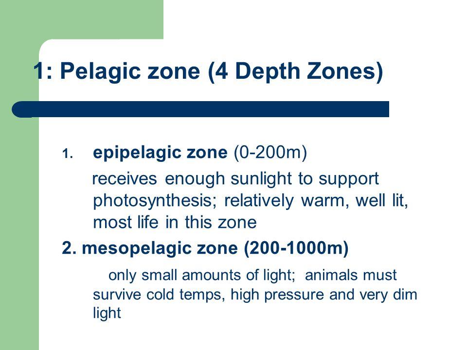 1: Pelagic zone (4 Depth Zones) 1.