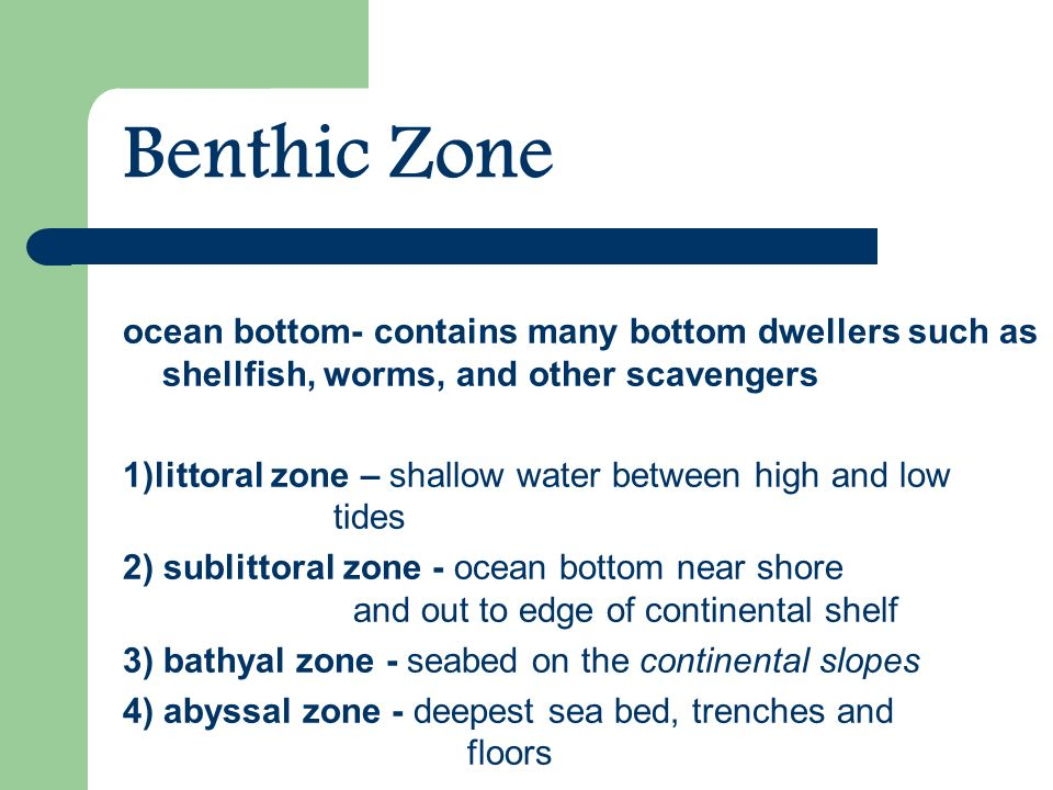 Benthic Zone ocean bottom- contains many bottom dwellers such as shellfish, worms, and other scavengers 1)littoral zone – shallow water between high and low tides 2) sublittoral zone - ocean bottom near shore and out to edge of continental shelf 3) bathyal zone - seabed on the continental slopes 4) abyssal zone - deepest sea bed, trenches and floors
