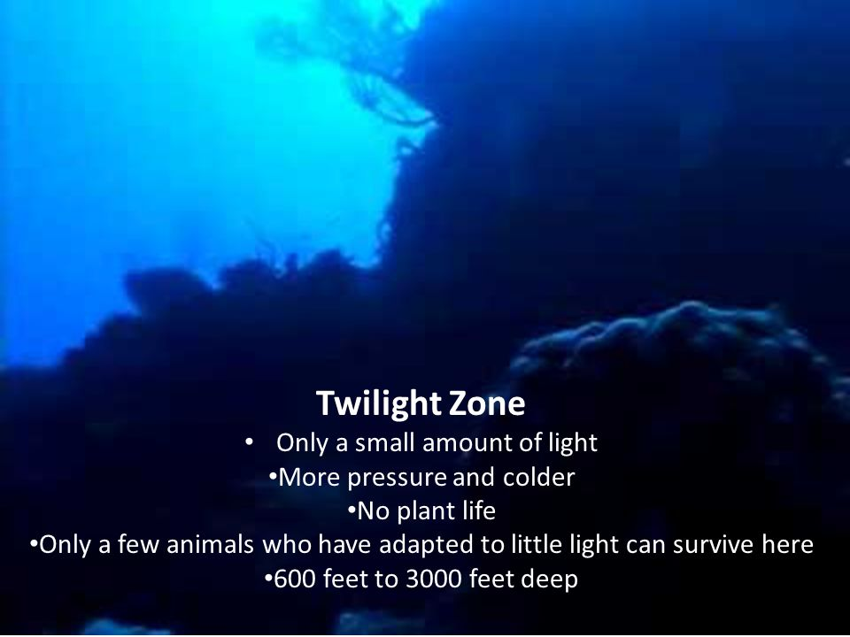 Midnight Zone Below 3000 feet No light 90% of ocean is in this zone Extreme water pressure Freezing Temperatures Not exactly cozy to most!