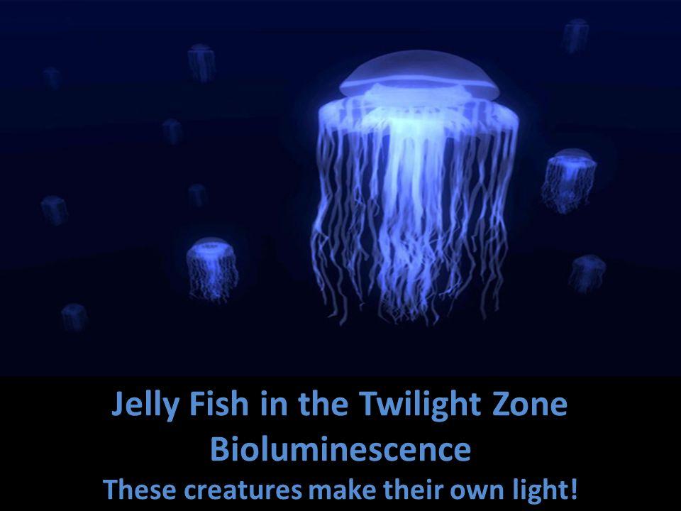 Hatchetfish In the Twilight Zone Humboldt Squid
