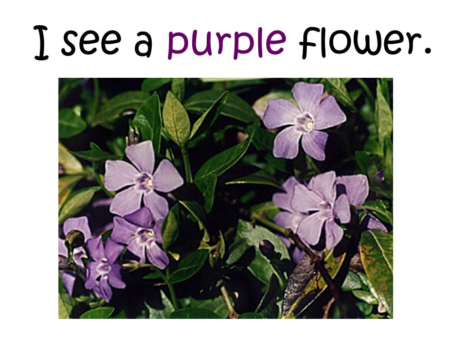 I see a purple flower.
