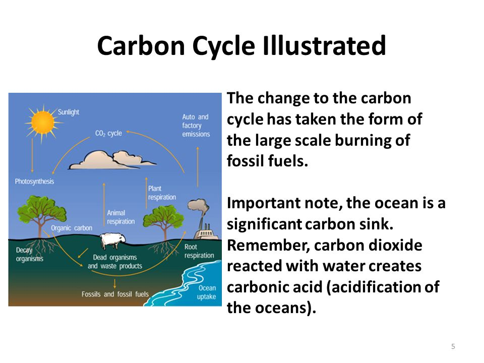 human alteration of the carbon cycle Human impact on the nitrogen cycle is diverse nitrogen effects on biodiversity, carbon cycling, and changes in species composition have also been demonstrated.