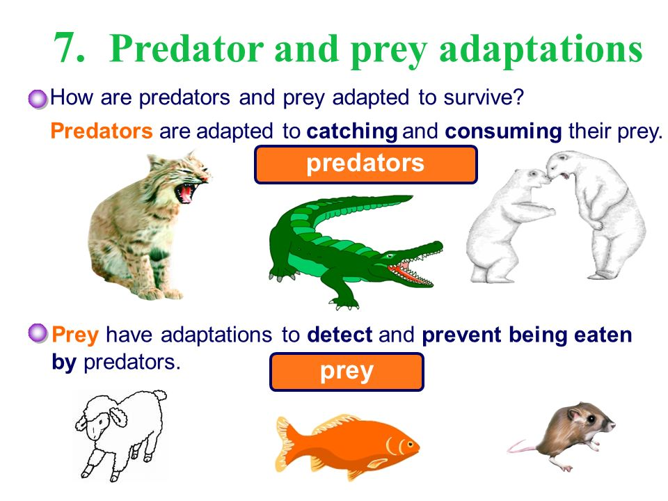 the relationship between predators and their prey
