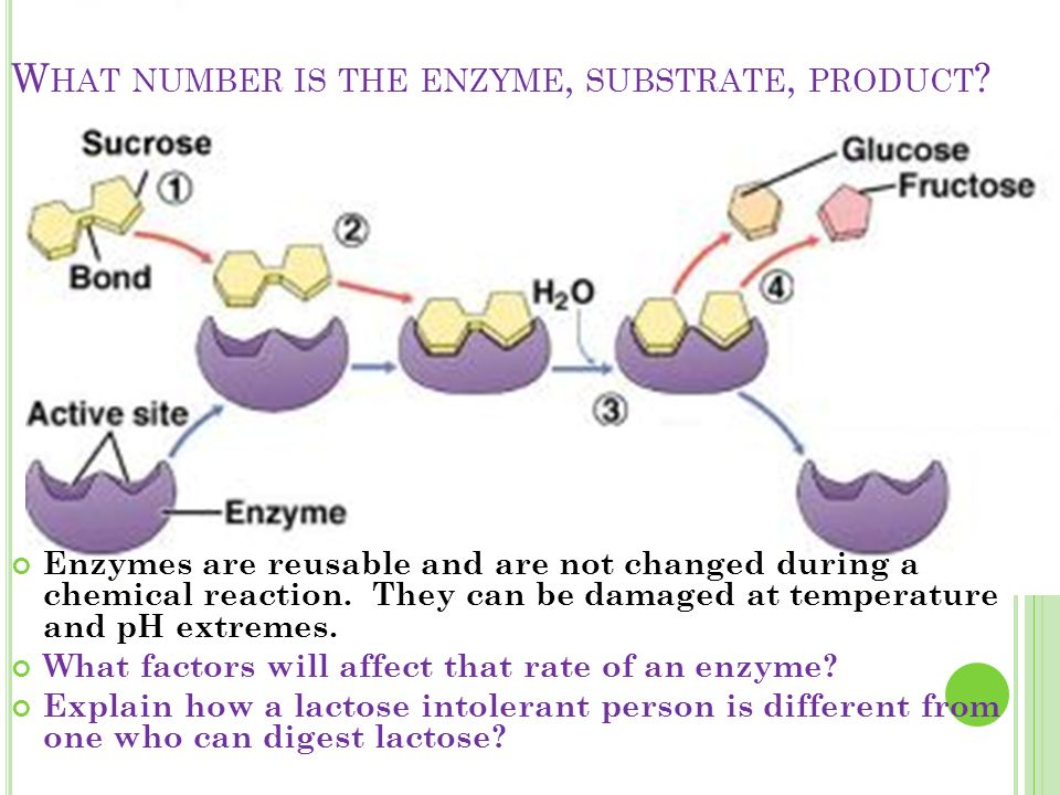 W HAT NUMBER IS THE ENZYME, SUBSTRATE, PRODUCT .