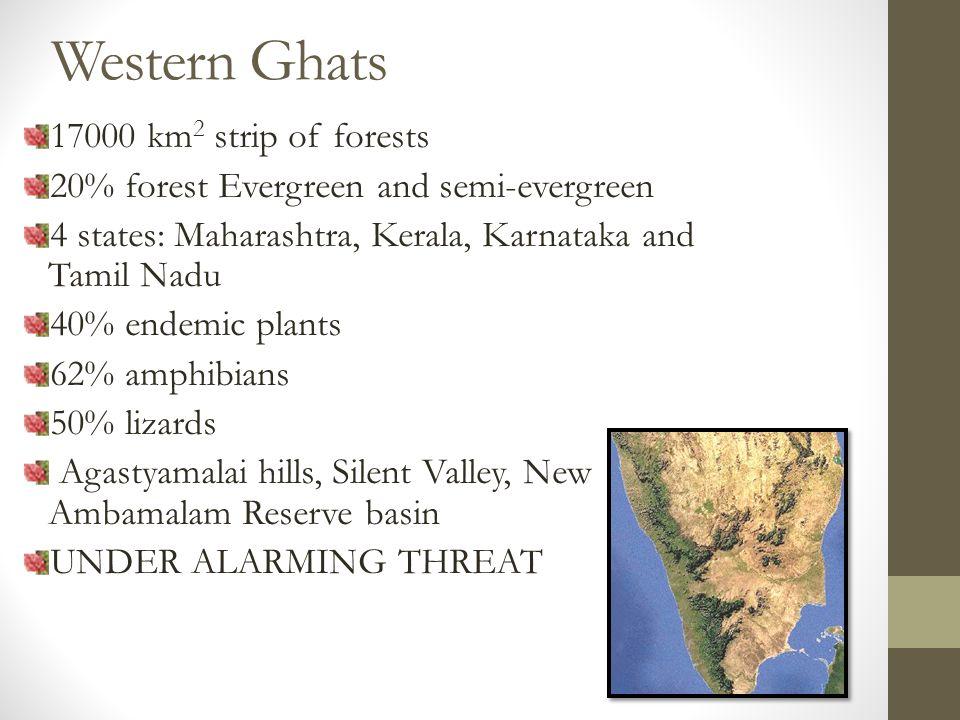 Western Ghats 17000 km 2 strip of forests 20% forest Evergreen and semi-evergreen 4 states: Maharashtra, Kerala, Karnataka and Tamil Nadu 40% endemic plants 62% amphibians 50% lizards Agastyamalai hills, Silent Valley, New Ambamalam Reserve basin UNDER ALARMING THREAT