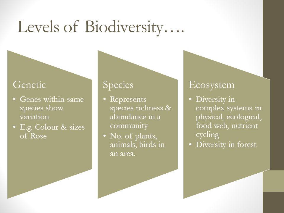Levels of Biodiversity…. Genetic Genes within same species show variation E.g.