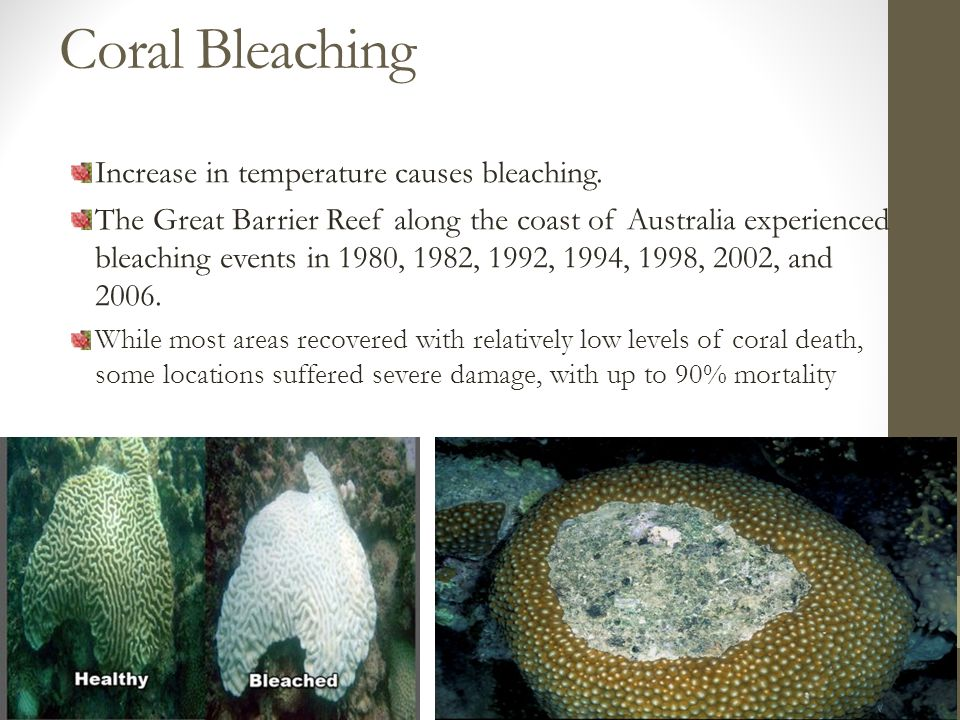 Coral Bleaching Increase in temperature causes bleaching.