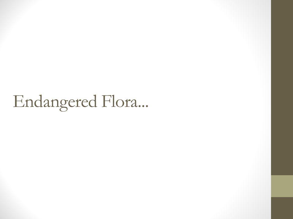 Endangered Flora...