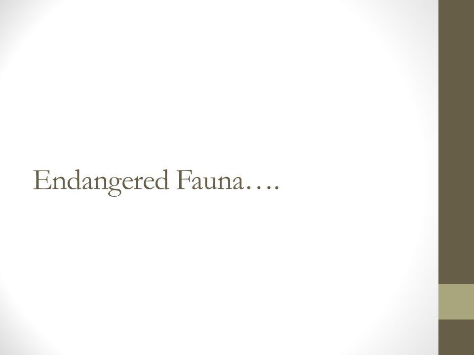 Endangered Fauna….