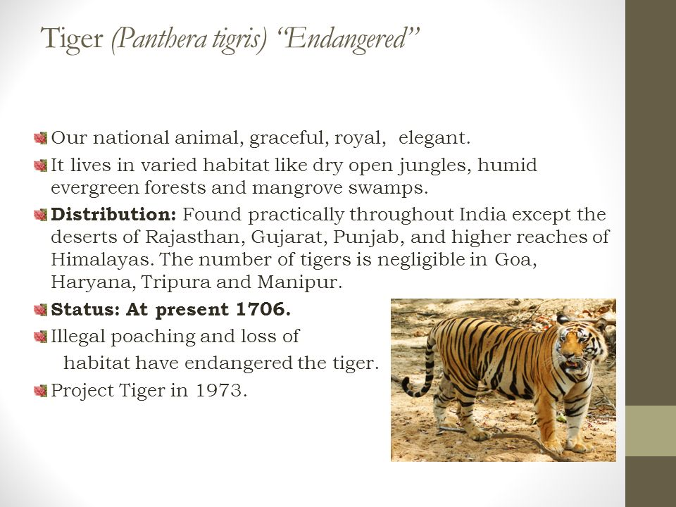 Our national animal, graceful, royal, elegant.