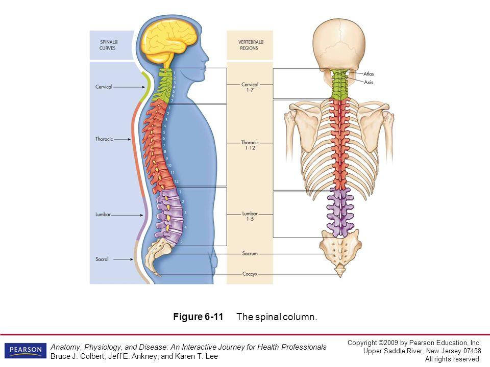 Fein Dorsalwurzelganglion Anatomie Ideen - Anatomie Ideen - finotti.info