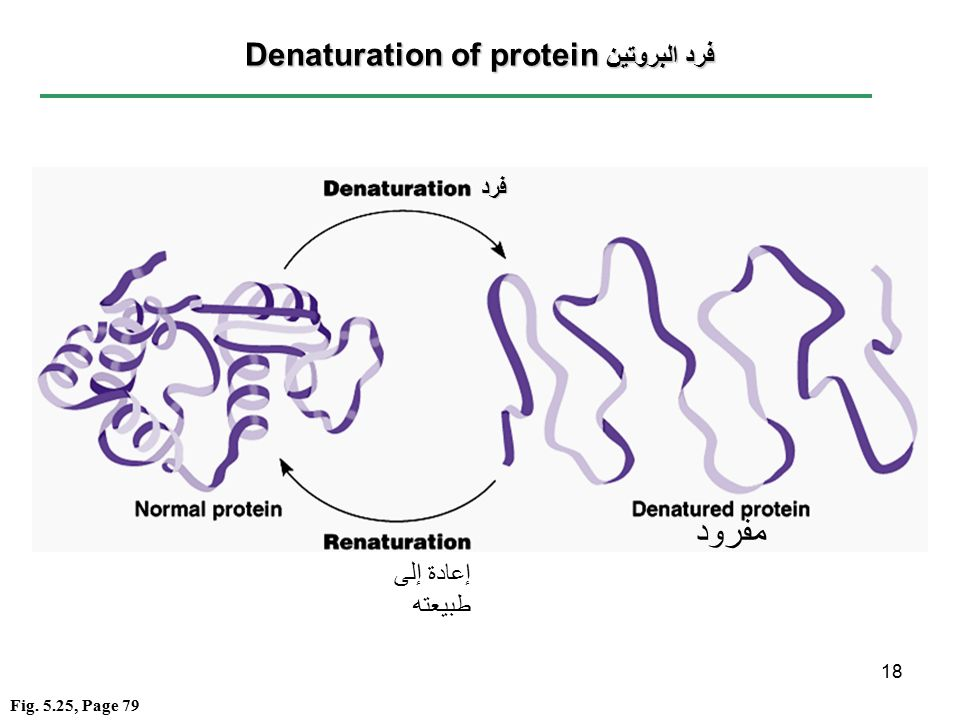 denaturing proteins denaturation of proteins is a reversibleand sometimes irreversibleprocess that involves
