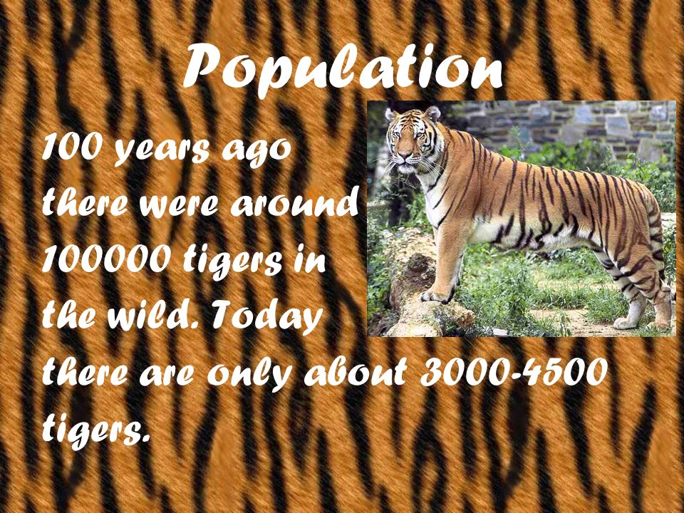 Population 100 years ago there were around 100000 tigers in the wild.