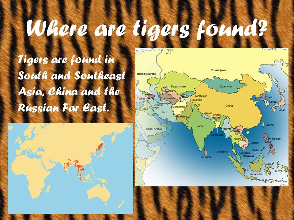 Where are tigers found.
