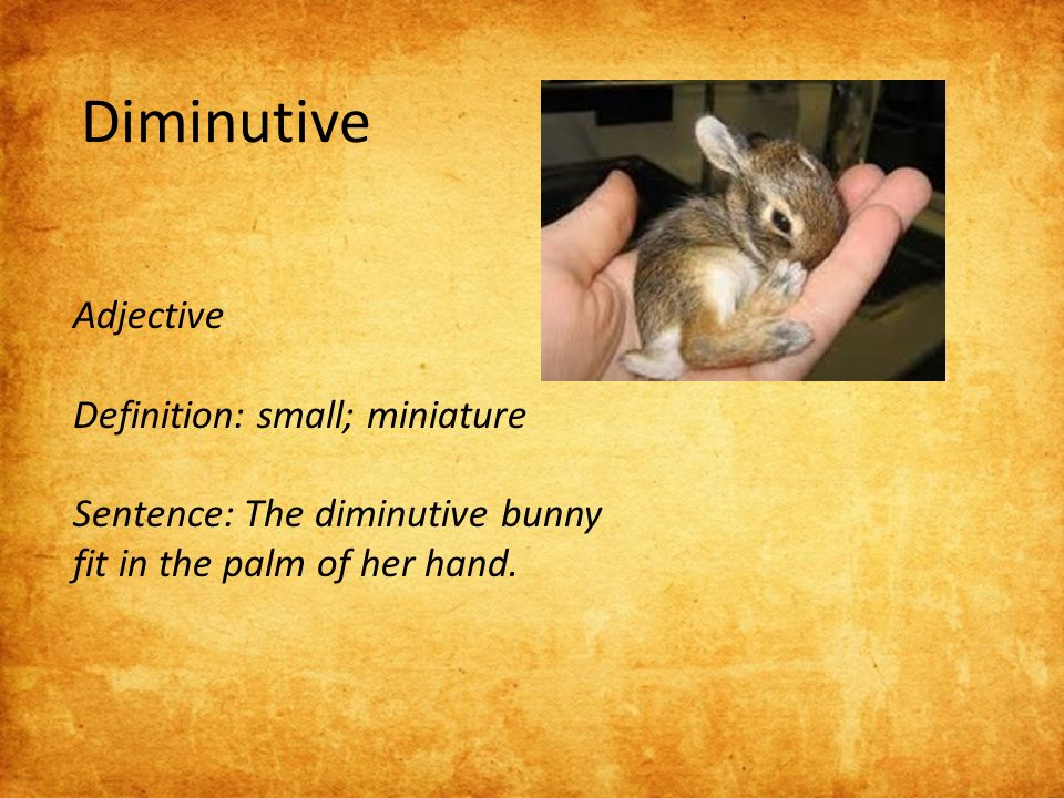 8 Adjective Definition: Small; Miniature Sentence: The Diminutive Bunny Fit  In The Palm Of Her Hand.