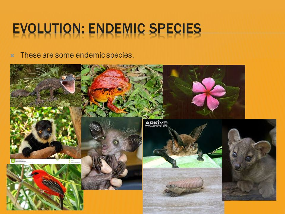 endemic species in india
