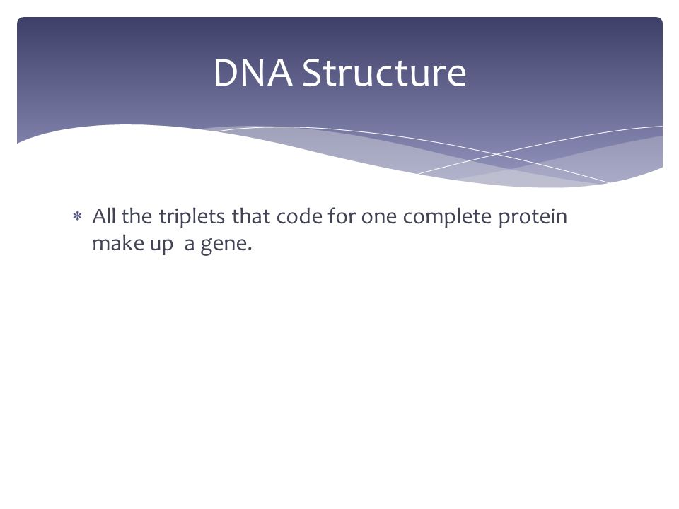  All the triplets that code for one complete protein make up a gene. DNA Structure