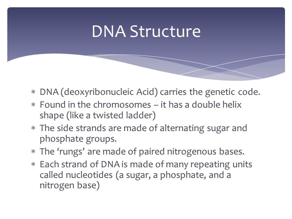  DNA (deoxyribonucleic Acid) carries the genetic code.