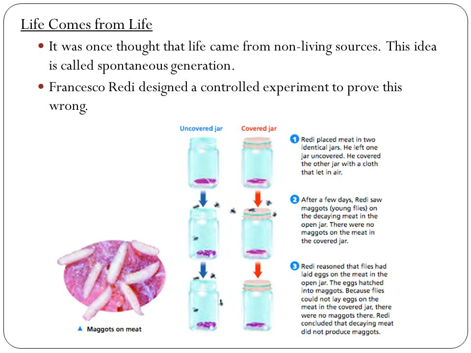 Homework 1 Living vs NONliving worksheet 2 Needs of living – Controlled Experiment Worksheet