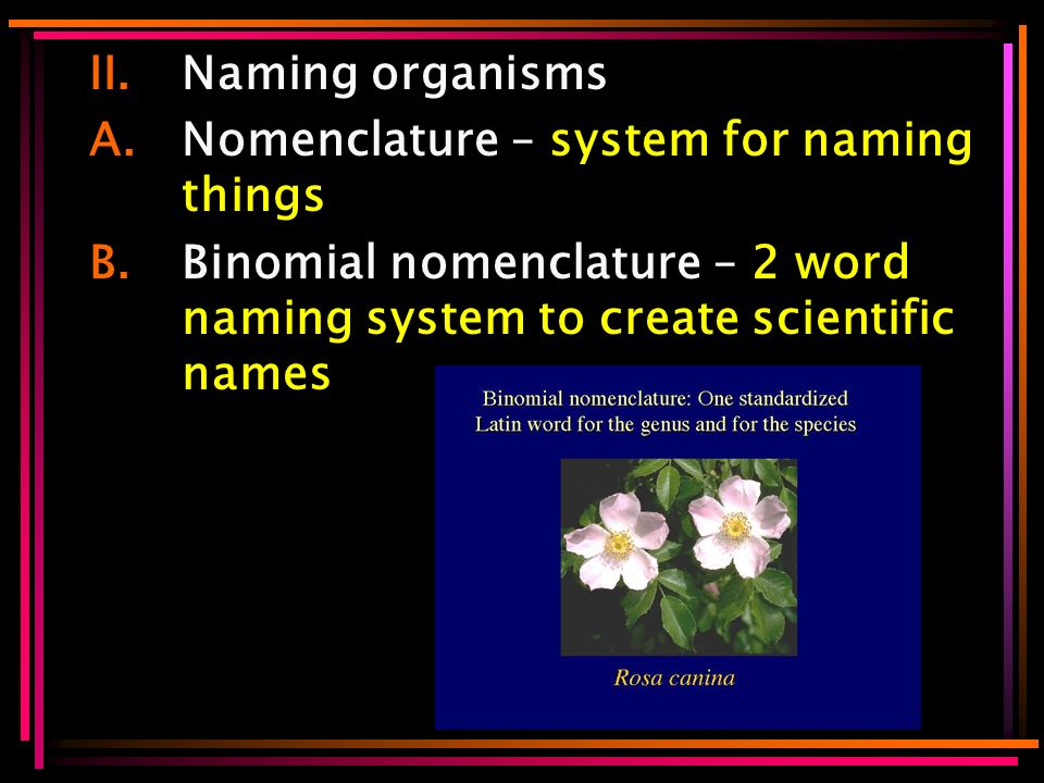 II.Naming organisms A.Nomenclature – system for naming things B.Binomial nomenclature – 2 word naming system to create scientific names