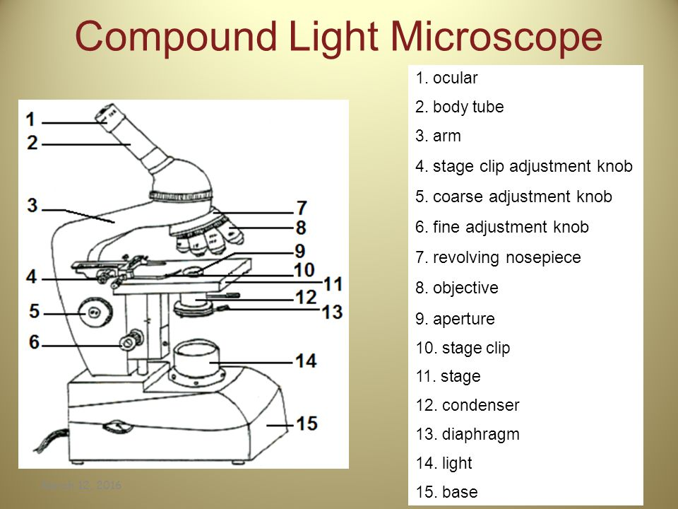 Parts Of A Compound Microscope Worksheet jannatulduniya – Microscope Quiz Worksheet