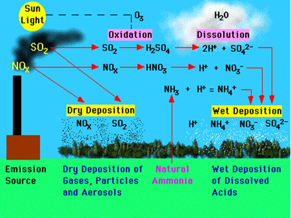 research paper on acid rain Essay acid rain within this past century, acidity of the air and acid rain have become recognized as one of the leading threats to our planets environment.