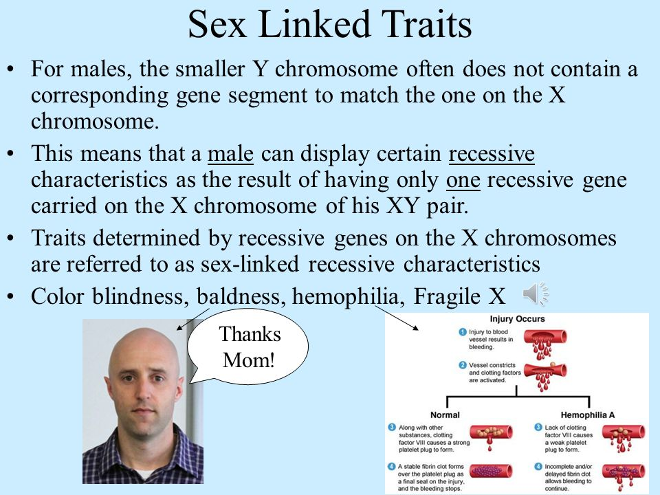 Sex Linked Traits For males, the smaller Y chromosome often does not contain a corresponding gene segment to match the one on the X chromosome.