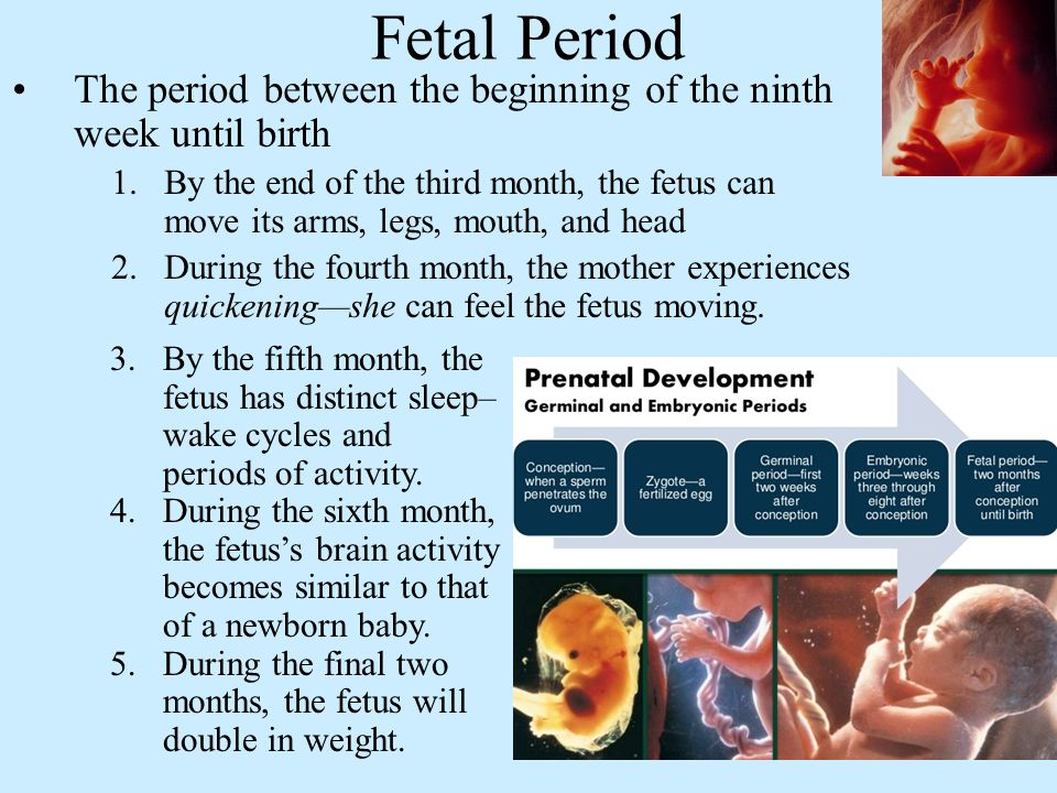 Fetal Period The period between the beginning of the ninth week until birth 1.By the end of the third month, the fetus can move its arms, legs, mouth, and head 2.During the fourth month, the mother experiences quickening—she can feel the fetus moving.