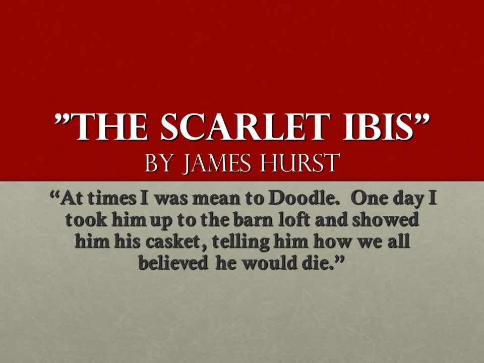 the scarlet ibis plot outline
