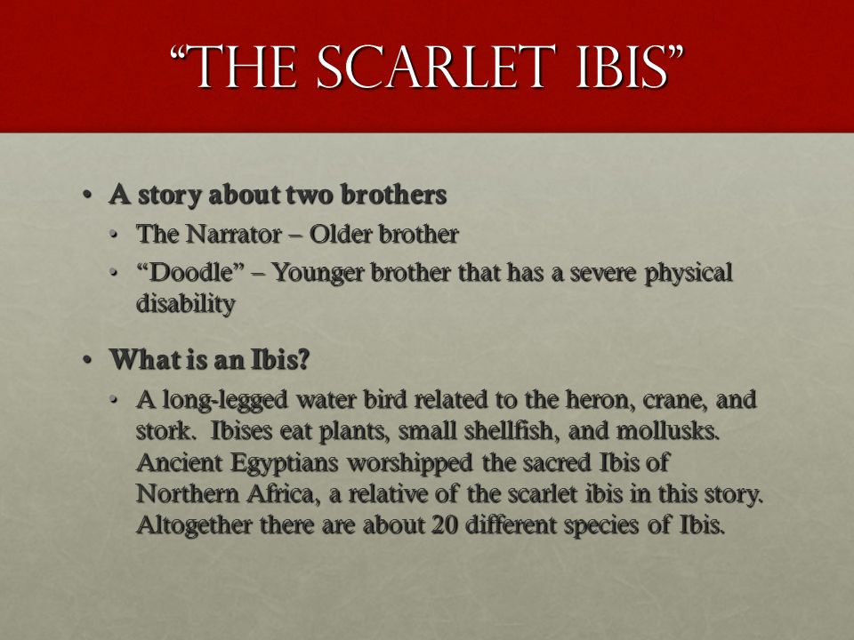 "the scarlet ibis by james hurst ""at times i was mean to doodle  the scarlet ibis a story about two brothers a story about two brothers the narrator"