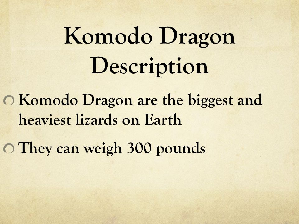 Komodo Dragon Description Komodo Dragon are the biggest and heaviest lizards on Earth They can weigh 300 pounds