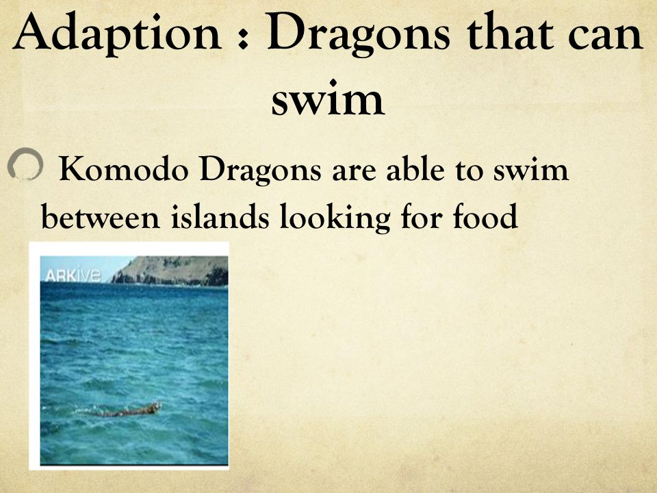 Adaption : Dragons that can swim Komodo Dragons are able to swim between islands looking for food